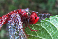 Examples of Dew Photography