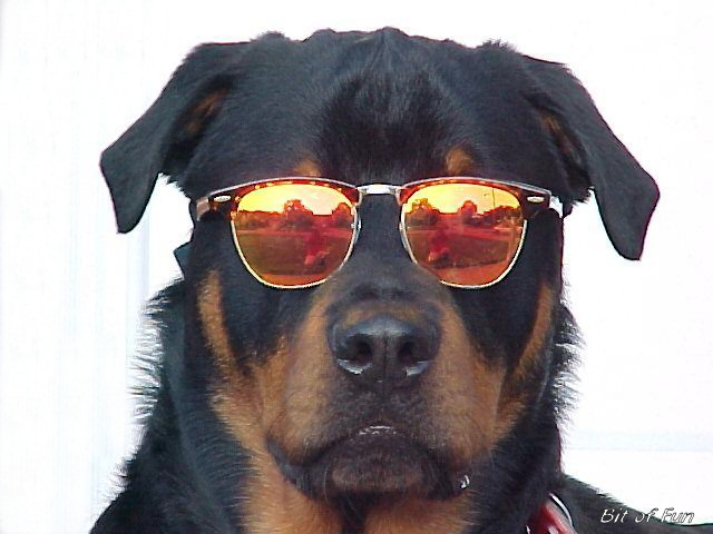 Animals with sunglasses - photo#12
