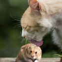 funny cat and hamster