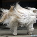 longhair and wind