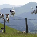 dogs jumping a fence