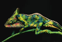 Chameleon Body-painting